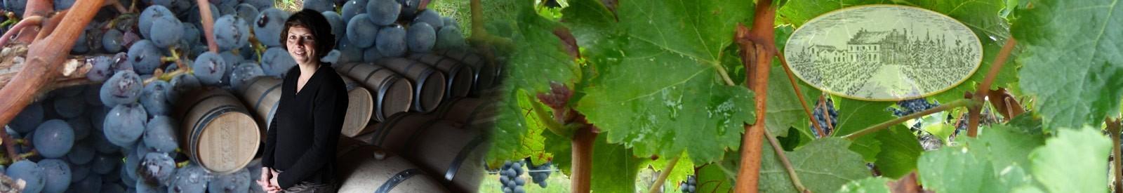 Château Trapaud - Saint-Émilion Grand Cru – Vin Bio