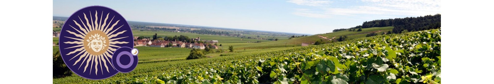 Domaine Michel Magnien - Morey-Saint-denis – Vin Bio