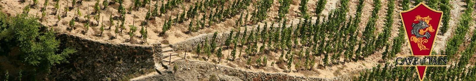 Cave de Tain - Crozes-Hermitage – Vin Bio