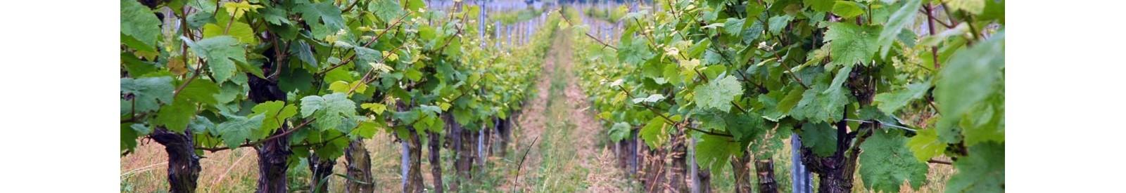 Hubert et Heidi Hausherr - Alsace - Organic wine