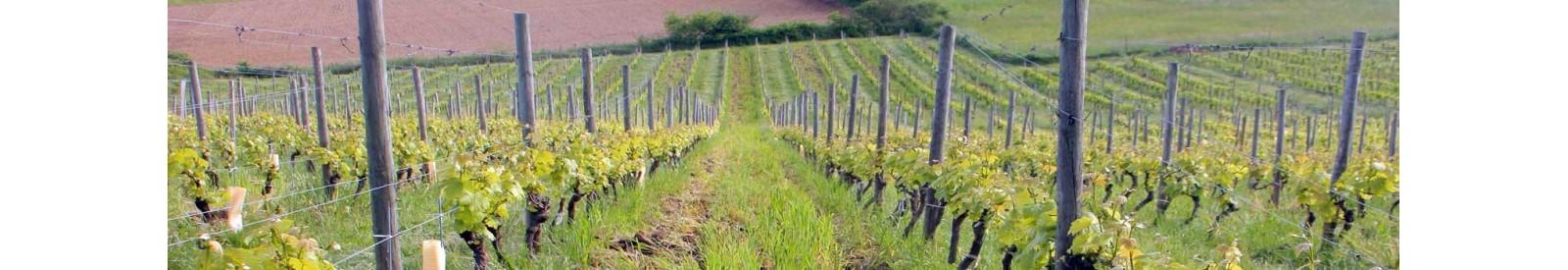 Le Clos Basté - Madiran - Organic wine
