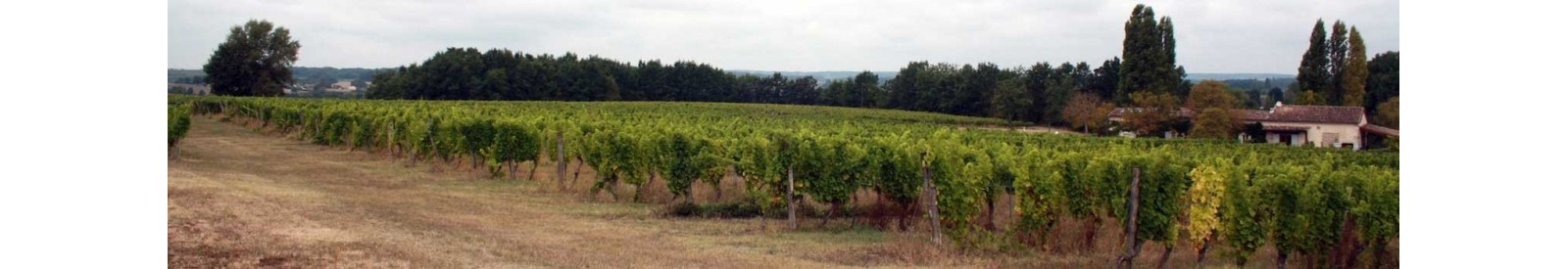 Château Haut-Fongrive - Bergerac - Organic wine | VIGNAPART