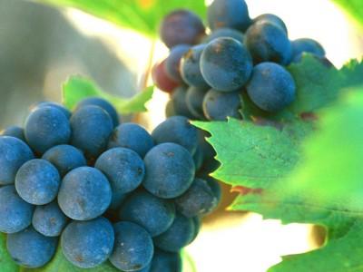 Combien faut-il de raisin pour faire une bouteille de vin de 75 cl ?