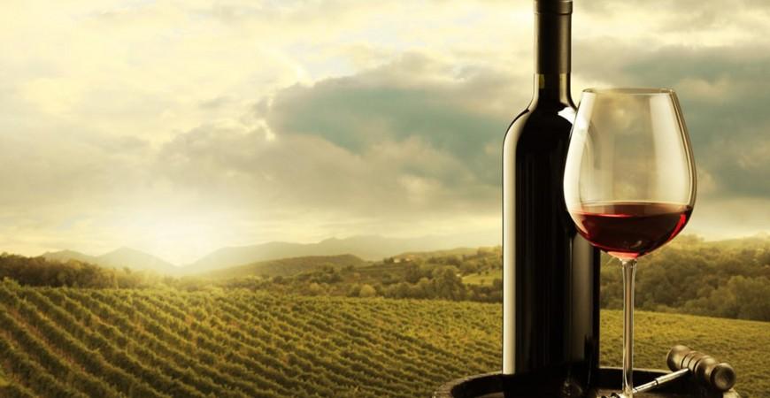 Comment cultiver le vin en respectant l'environnement ?