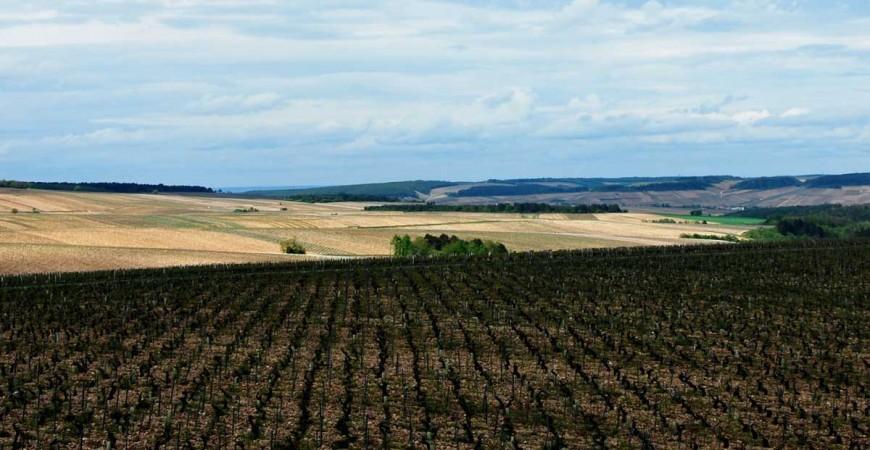 Le vignoble français contrôlé à 98%, par des Français !